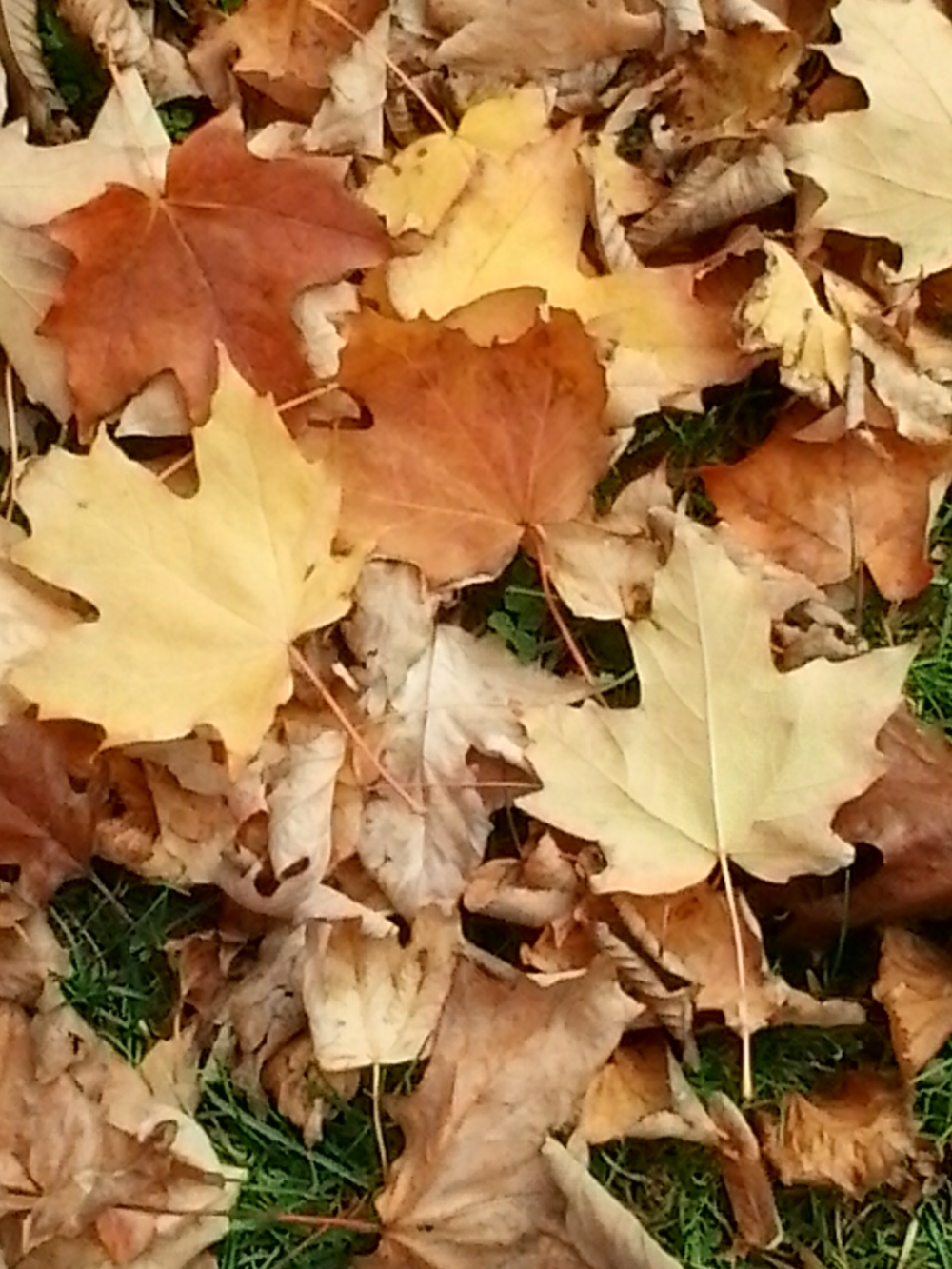 Autumn Leaves, taken in downtown Charlottetown